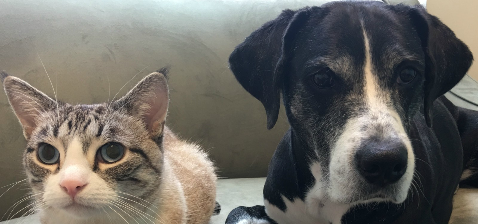 Dog and cat at the veterinarian